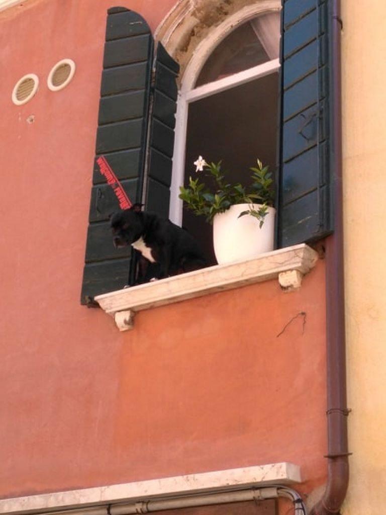 Włochy - pies